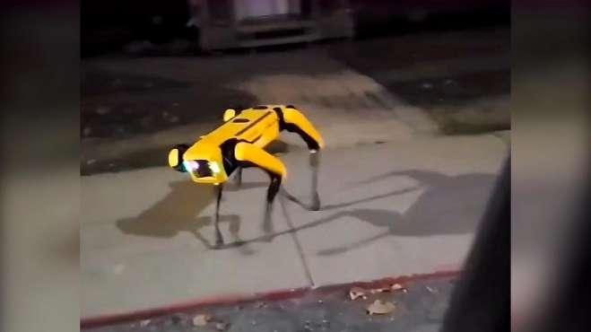 机器狗夜晚独自在街头游荡