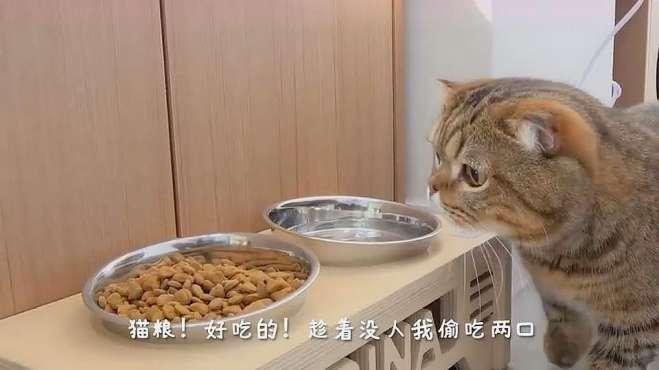 竟在医院偷吃猫粮,猫:我都饿了一天了,还不能吃吗?