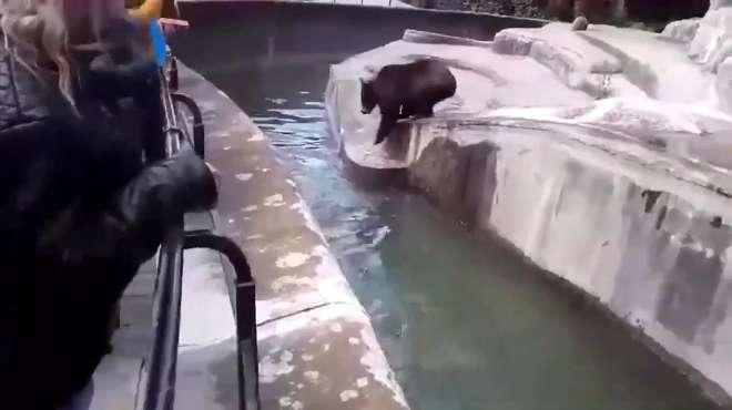 俄罗斯媒体报道:醉汉冲入动物园与熊对打,果真战斗民族!