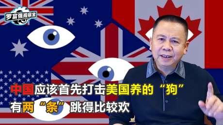 """罗富强:中国应该首先打击美国养的""""狗"""",有两""""条""""跳得比较欢"""