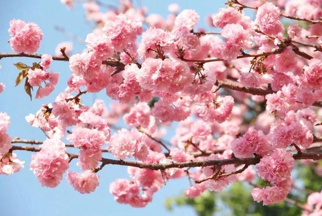 云赏花|穿过花海,把广东最美的春天送给你!