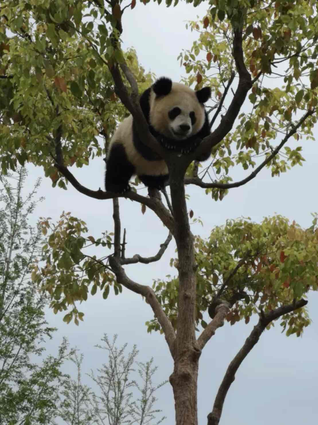 上海动物园和野生动物园哪个更值得去? 动物园 动物 上海动物园 上海旅游 旅游问答  第4张