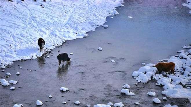 呼伦贝尔不冻河火了!零下40度都不结冰,常有动物来喝水