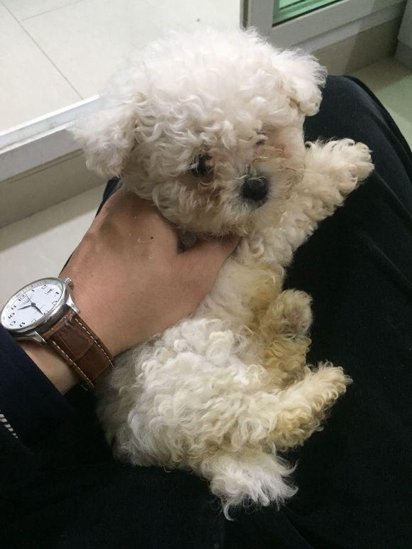 网友从狗贩子手里买了一只小狗,狗贩子对狗狗一点儿都不好