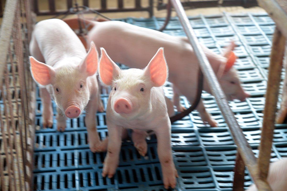 属猪的和什么属相最配 属猪的和什么属相最配