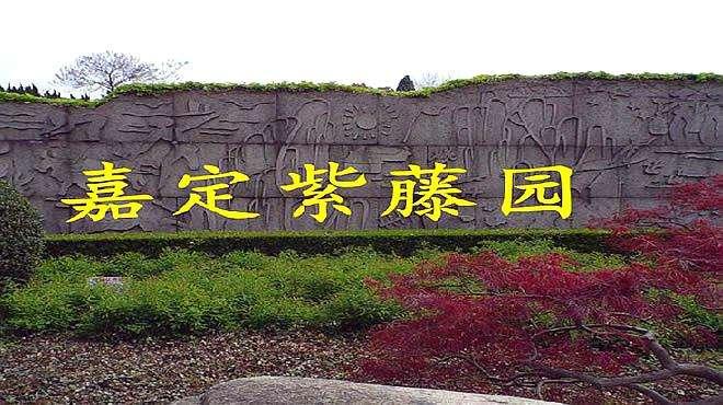 嘉定紫藤园游览视频