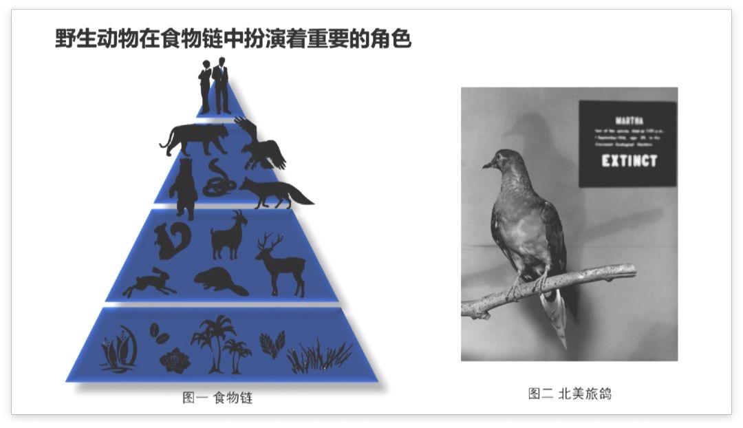 保护野生动物