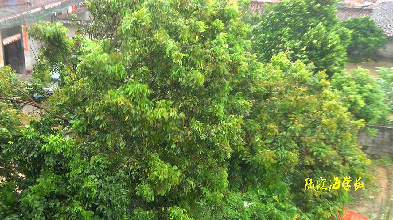 山竹超强台风即将登陆茂名,现场的树木东倒西歪,你们城市还好吗