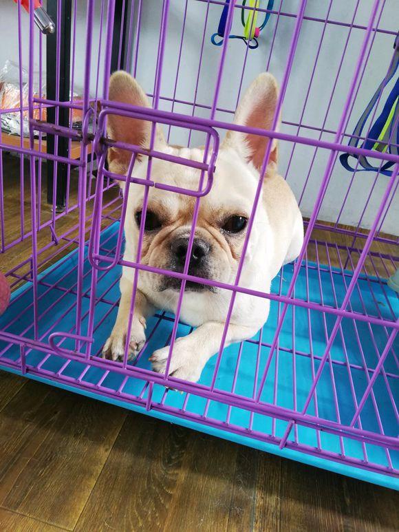 """法斗被网友关在笼子里,而且还""""嘲笑""""它,狗:太委屈"""
