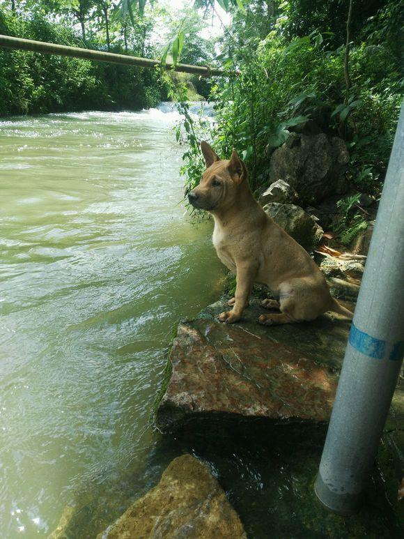土狗挺会找避暑的地方,在河边树荫里听着水流声乘凉