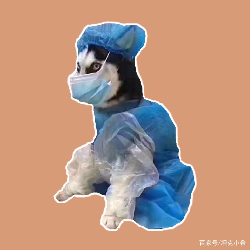 硬核宠物防护服