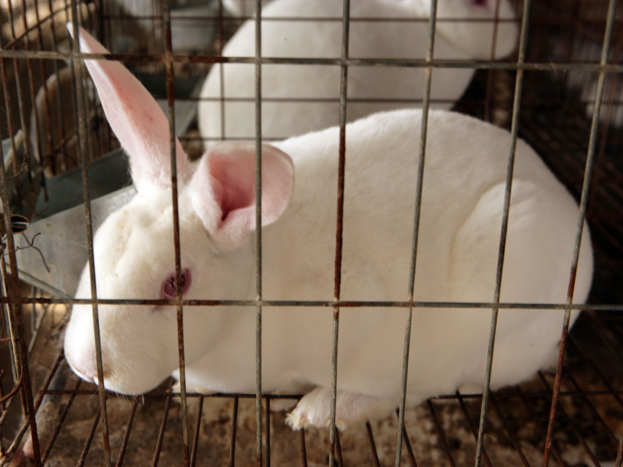 属兔生在几月最命苦属兔的五大贵人