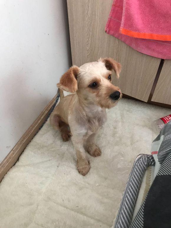 捡了一只被打伤的狗狗,带回家之后发现赚了,它是雪金