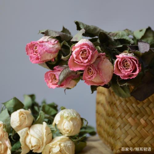 男友送的玫瑰花太多了,怎么办?玫瑰花延长保存法,干花的做法~