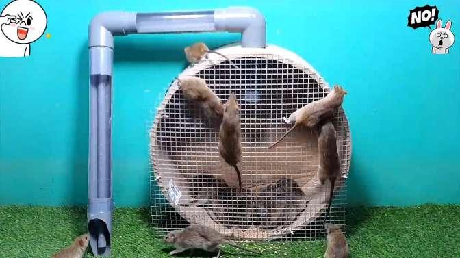 小伙家里闹了鼠灾了,做了一个滚动陷阱,抓到很多老鼠!
