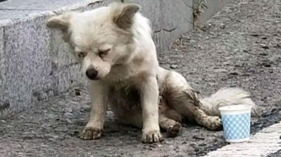 """流浪狗险些成了""""盘中餐"""",多亏阿姨相救,保住狗狗一命"""
