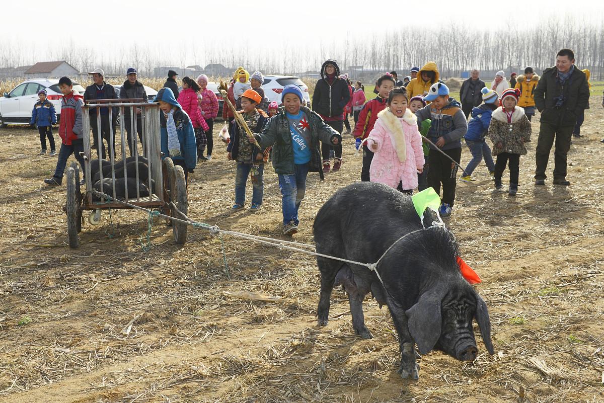 猪跟什么属相配 猪跟牛的属相合不合