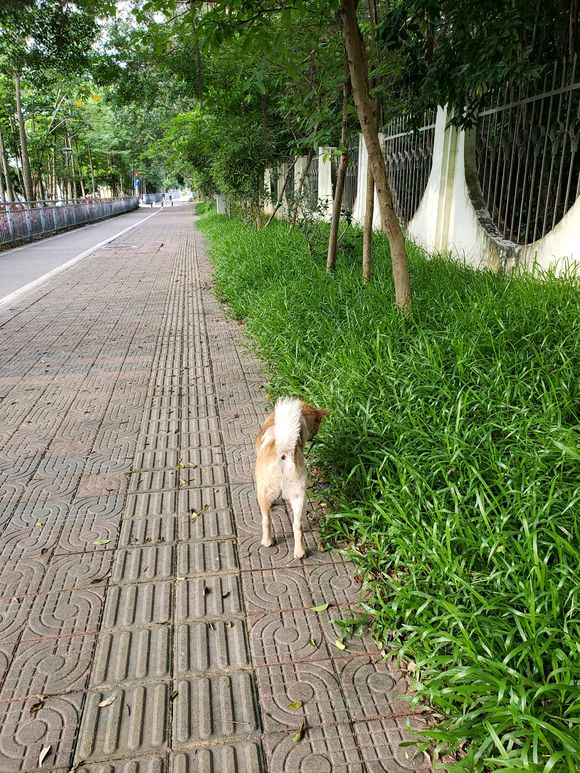 遇到一土狗寻食,给它吃了点东西,它一直跟到公园门口