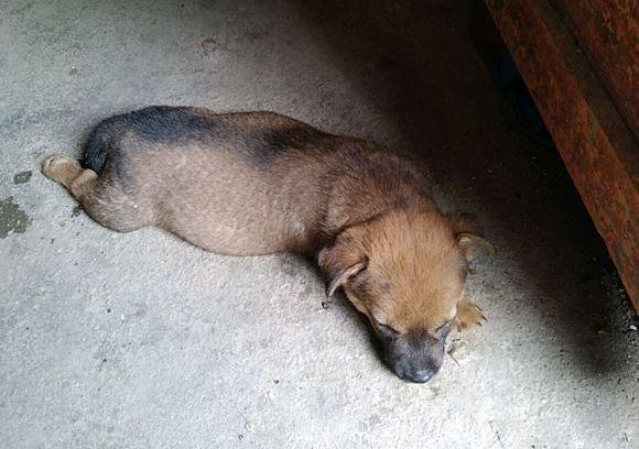 小狗刚到家时有点傻,一个月的变化还真大,它长了…