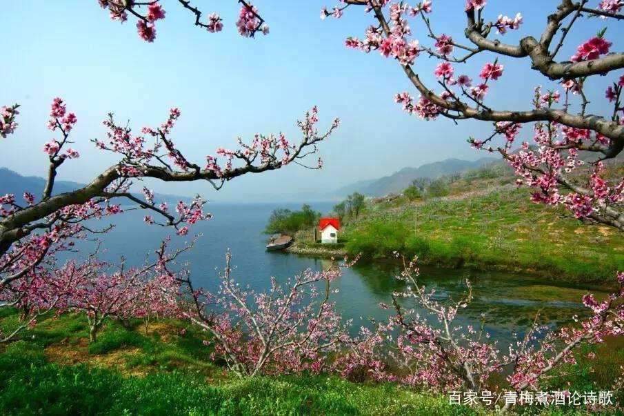 最新版《在那桃花盛开的地方》歌词