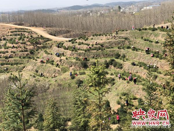 光山文殊乡:疫情未阻田园香 产业发展采茶忙