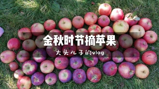 果园里的苹果随便吃会不会被吃光呢