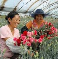 农民爱花草