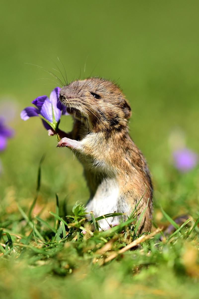 """996属鼠女几月出生好属鼠本命年生孩子好吗"""""""