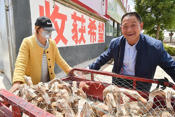 """驻马店这个村:给贫困户分蛋鸭,下鸭蛋""""滋润""""日子……"""