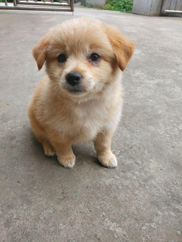 从河边捡了一只小狗回来,朋友看到后大呼:你赚了!