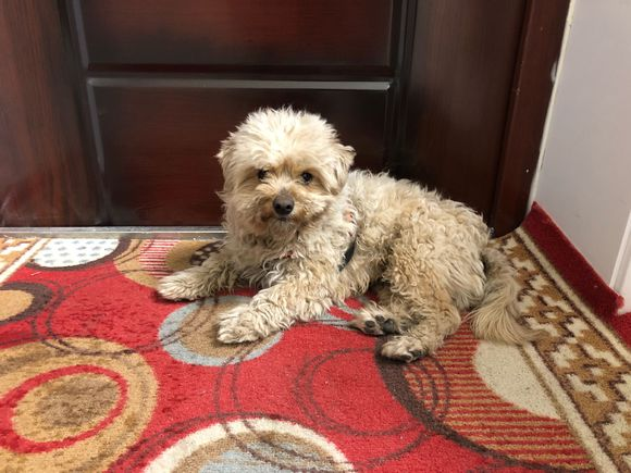 下班走在路上突然跑出一只流浪狗,它一直跟着到家了