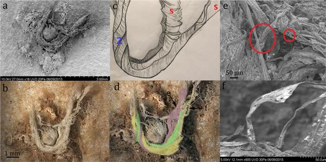 考古发现,人类已知最古老细绳制作,距今4.1万至5.2万年