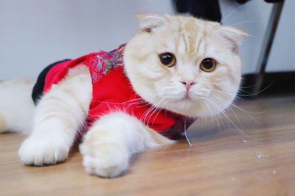 小猫总是以各种有趣的眼神盯着网友,喵:你好看……