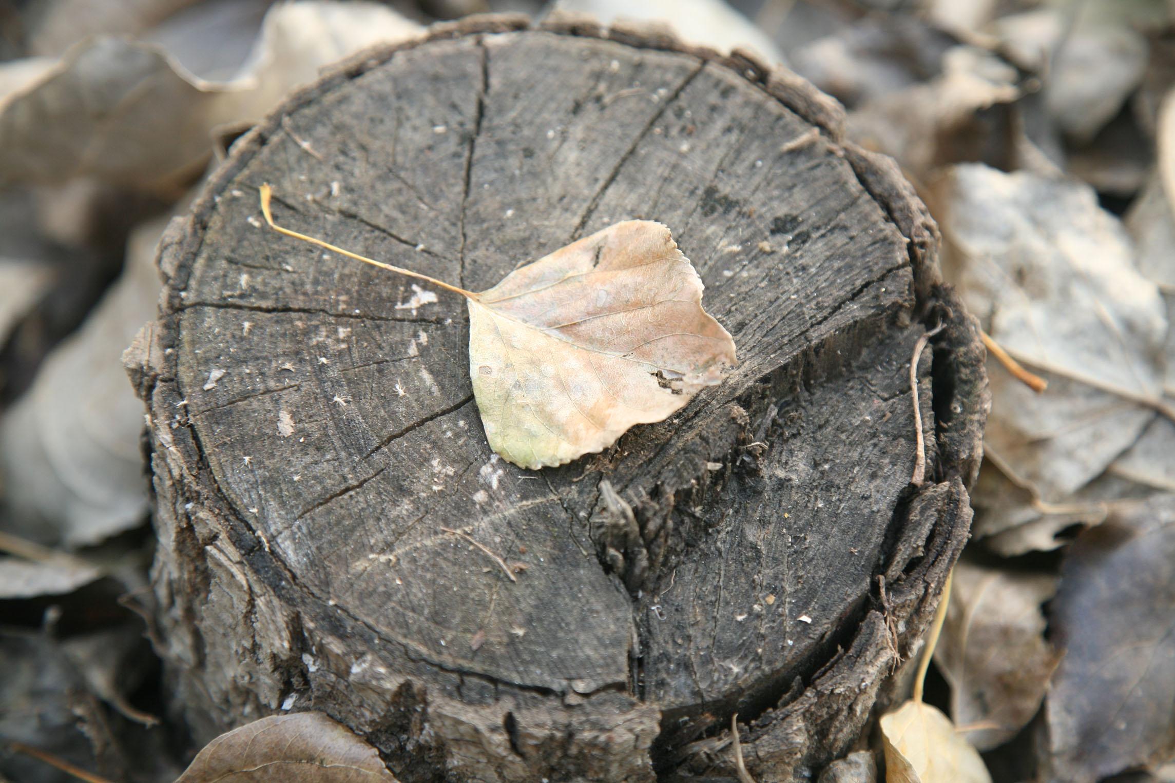 八字缺木怎么补 缺木的人戴什么最旺木