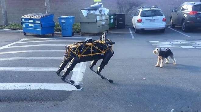 真狗第一次遇到波士顿机器狗,它是被吓着了还是太兴奋了?