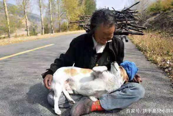 老人收养了一只流浪狗,一次意外中,狗狗在关键时刻救主人一命