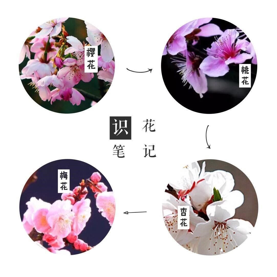 支付宝AR识花 教你一眼就知道花的品类【教程】 AR资讯 第3张
