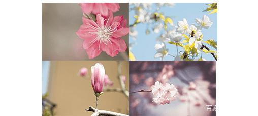 支付宝AR识花 教你一眼就知道花的品类【教程】 AR资讯 第1张