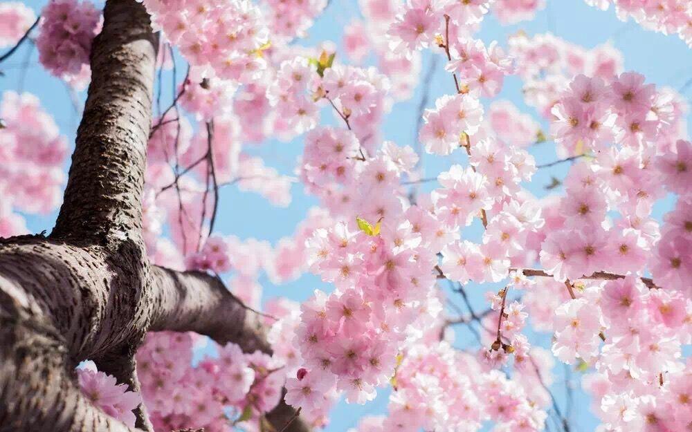 春+和+你