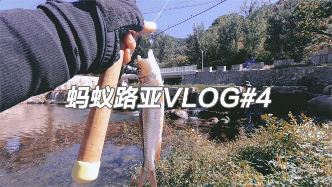 路亚实战:探钓北京怀柔神堂峪溪流马口,解锁新奇物种