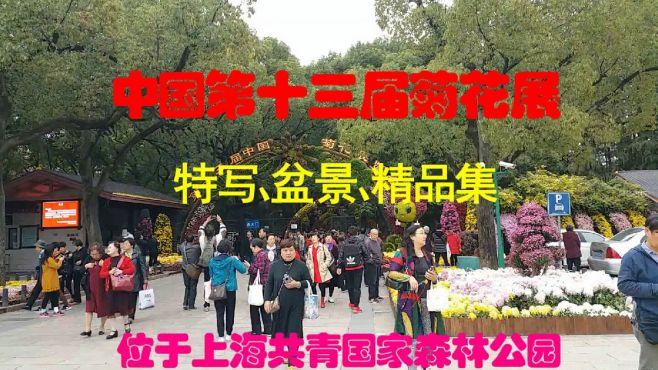 中国第十三届菊花展,特写,盆景,精品集